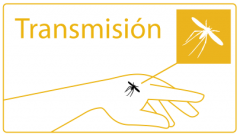 Transmission of leishmaniasis: fly biting a hand
